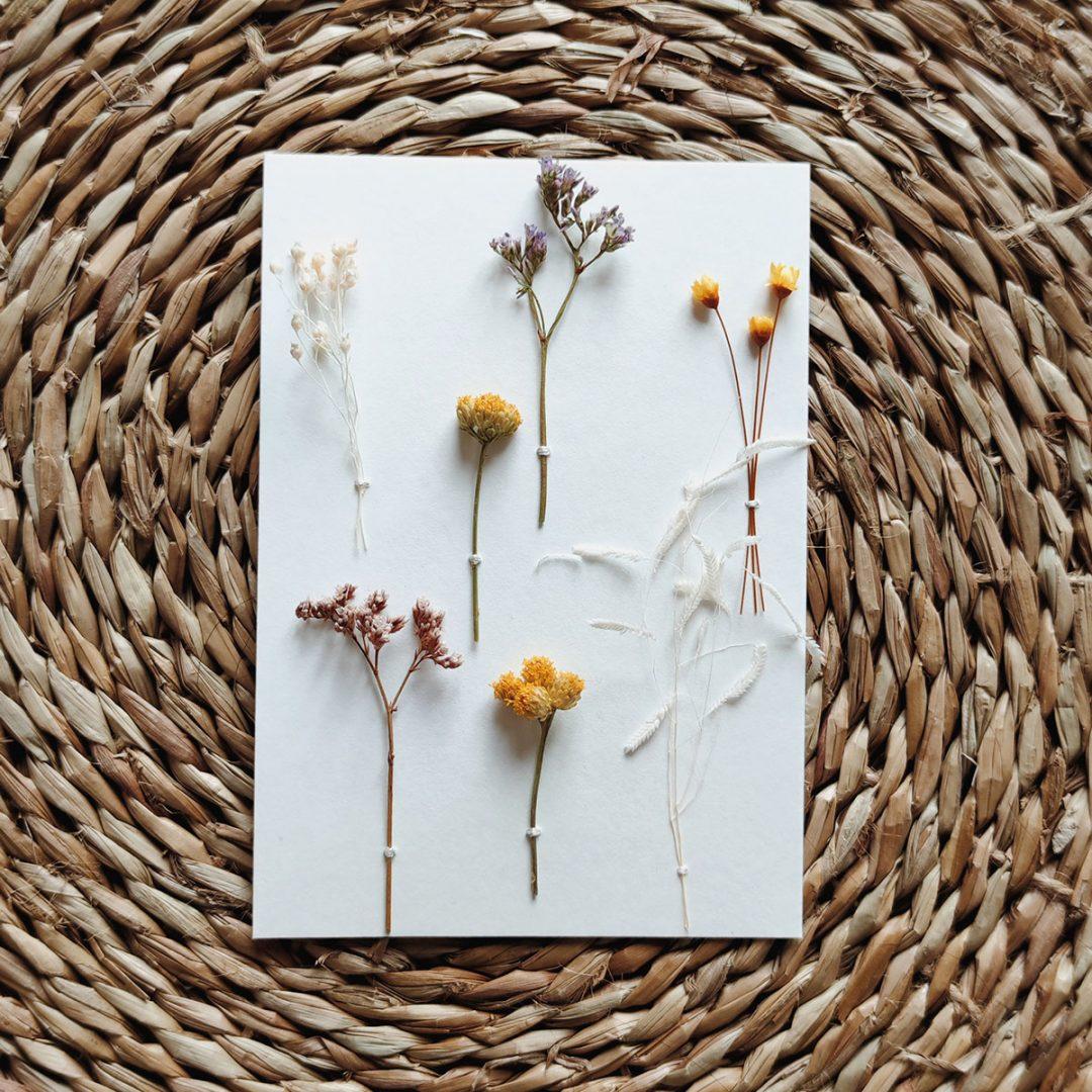 augustin-herbier-carte-jaune-rose-creme-lona