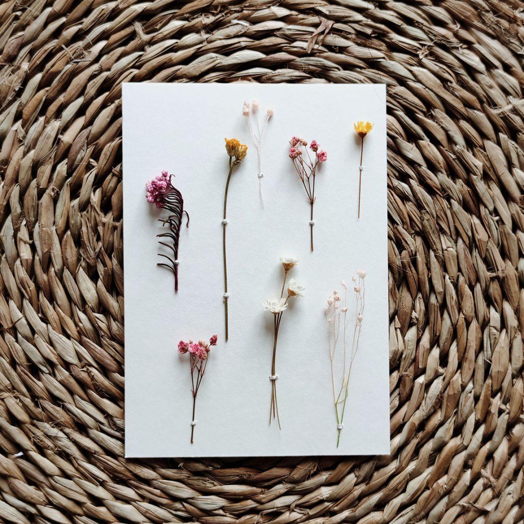 hipolyte-herbier-carte-rose-jaune-blanc-gypso